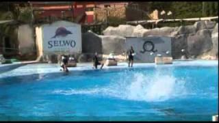 Benalmadena Selwo Marina Dolphin Show
