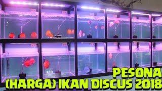 Referensi Daftar Harga Ikan #Discus Di Indonesia 2018 | Memelihara Ikan Discus | Pesona Ikan Discus