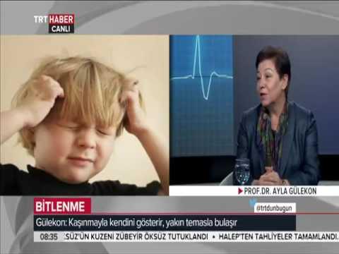 Prof. Dr. Ayla Gülekon Bitlenme Ve Tedavisi Hakkında Bilgi Veriyor
