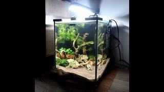 Запустил 20 литровый аквариум - коряжник для креветок!