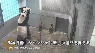 ☆ Cute Panda ☆ #18  シャンシャン 新しい遊びを覚える