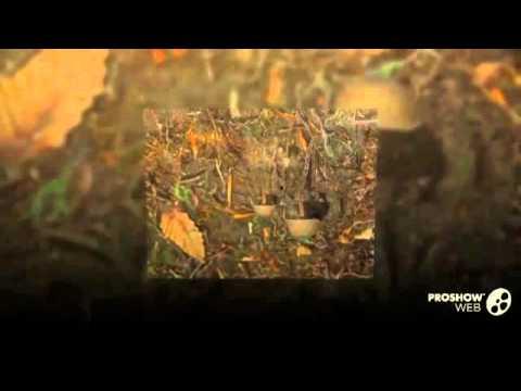 Psilocybe novae-zelandiae - fungi kingdom