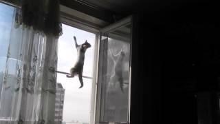 видео Москитная сетка