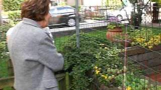 Dogue De Bordeaux Buba Con Labrador,nonno Oliver