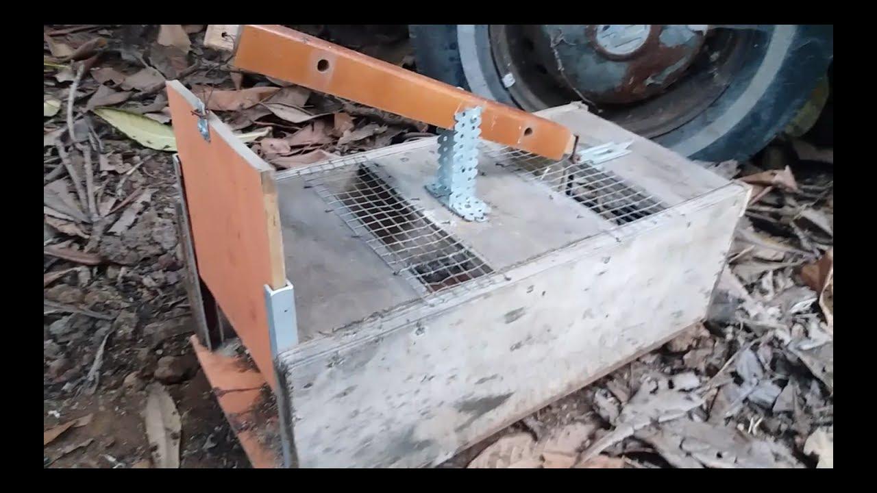 Trampa para ratas casera comprobada youtube - Trampas para cazar ratas ...