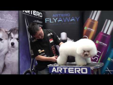 ARTERO Creative Team Singapore Mr. Park Sang Hun Bichon Full Grooming Video