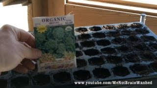 Starting Veggies Seeds Indoor