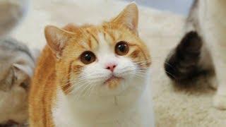 【花花与三猫】铲屎官带4只猫咪搬入豪宅,刚开始怕到钻床底,熟悉后自己躺浴缸