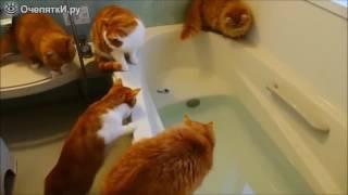 Смешные падения котов!