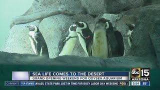 OdySea Aquarium opening in Scottsdale this weekend