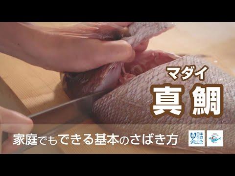 真鯛(まだい)のさばき方 - How