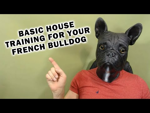 Basic House Training For Your French Bulldog