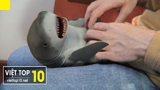 Top 5 Cutest Pets Trend 2019 - baby shark - Amazing - Viet Top 10