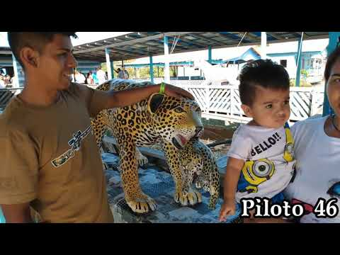 Piloto 46 No Lago Dos Pirarucus Na Amazônia!