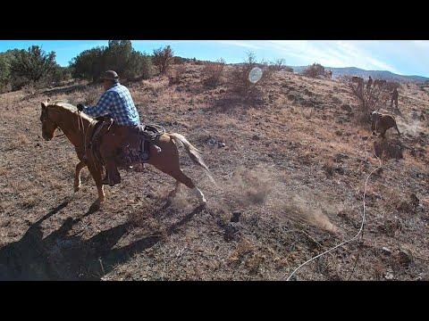 Big Bull Hunt