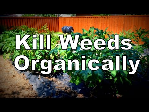 Easiest Organic Way to Kill Weeds in the Garden