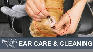 Ear Mites How To Clean Cat S Ears
