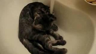 Кот любит купаться