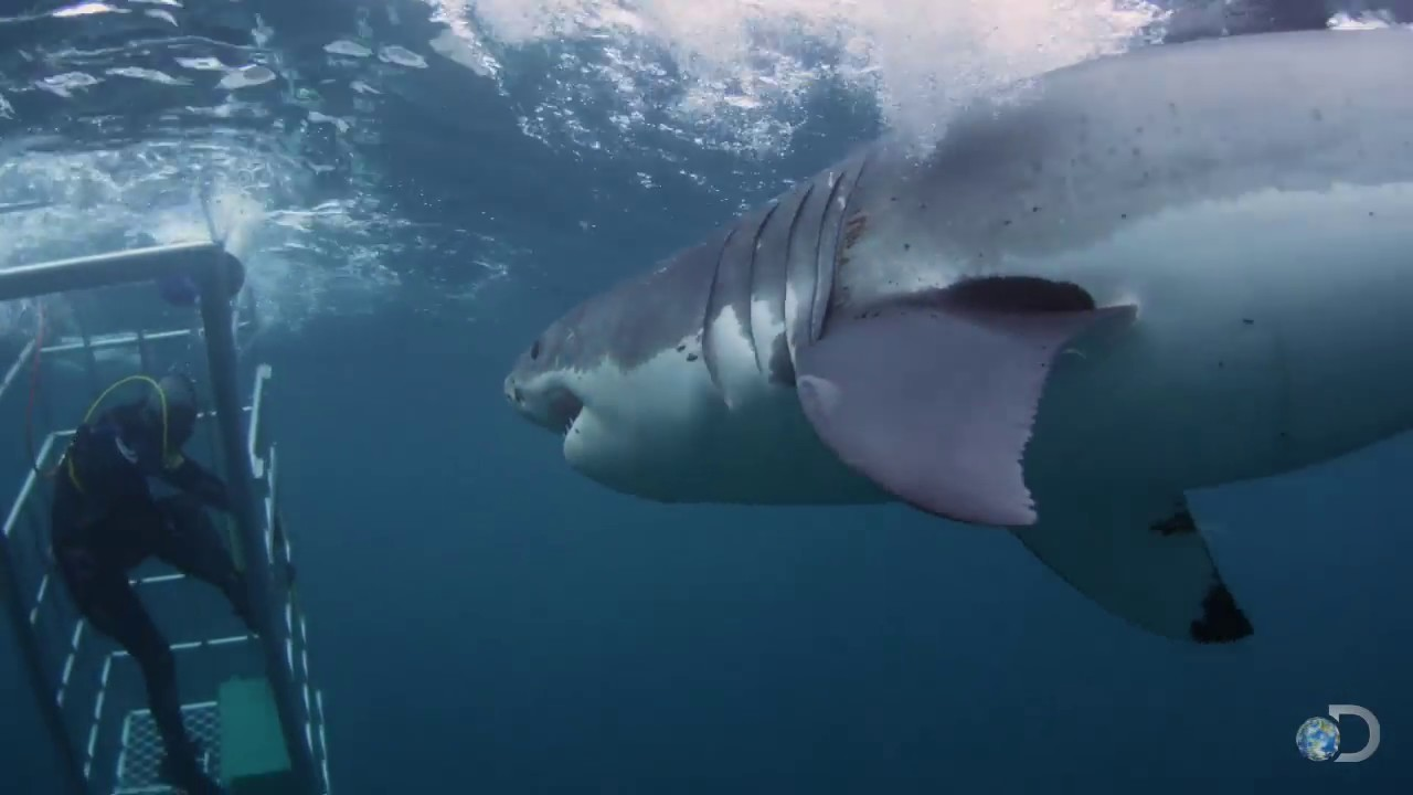18 foot shark attacks cage great white serial killer youtube