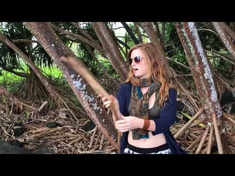 Hala; sacred Plant of Hawaii