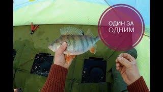 Нашли ту самую лунку Один за одним крупный окунь Рыбалка в Казахстане
