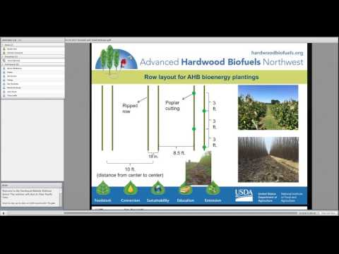 Webinar: Cream of the Coppice - Hybrid Poplar Yields During the Establishment and Coppice Cycles