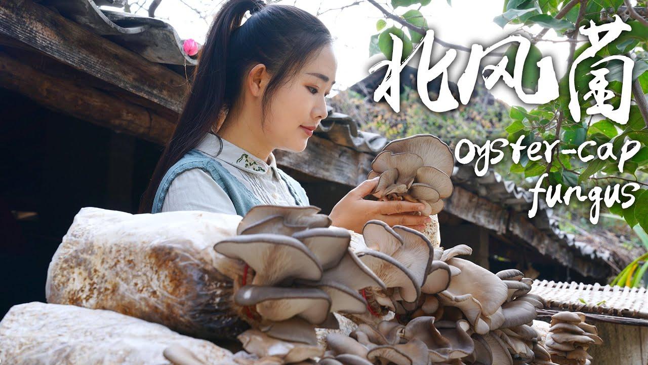 """菌子——云南人的""""本命菜""""【滇西小哥】"""