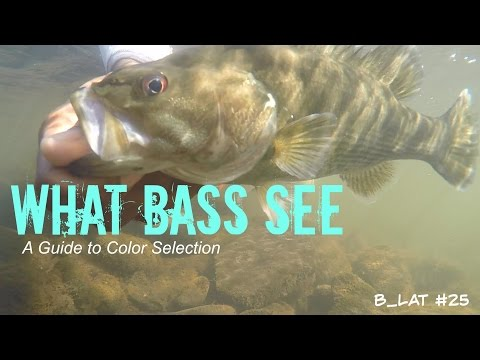 What Bass See (B.Lat #25) How To Select Lure Colors