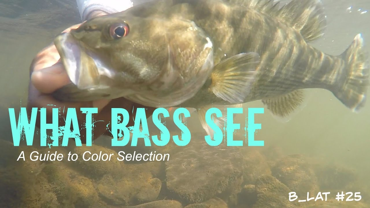 What Bass See (B.Lat #25) How to Select Lure Colors - YouTube