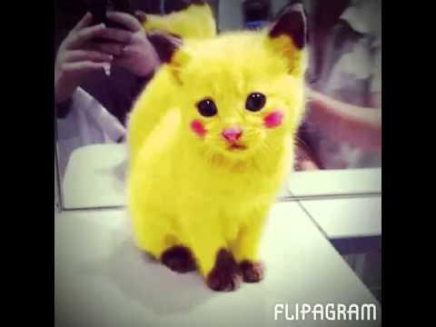 Les chat mignon youtube - Photo chat mignon ...