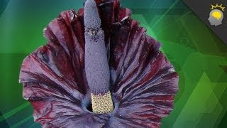 Behold, the Corpse Flower - Science on the Web #21