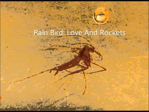 Rain Bird: Love And Rockets