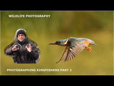 Photographing Kingfishers Part 2-wildlife Photography