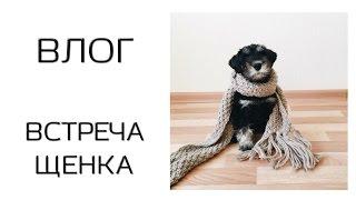 VLOG / Встреча щенка