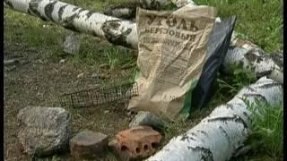 ЧП на месте пикника. Как депутаты предлагают бороться с любителями пожарить шашлыки во дворах?