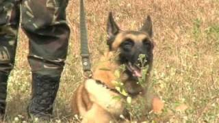Us, Philippine Forces Train Military Working Dogs During Balikatan