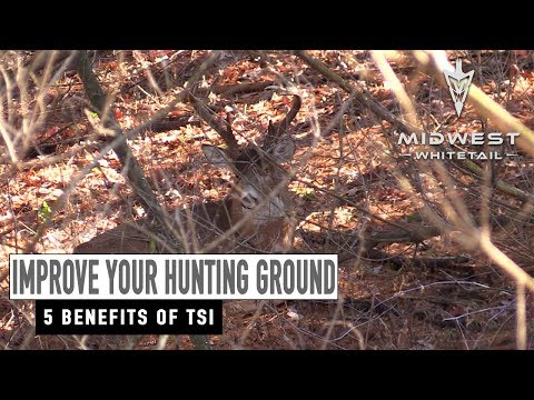 Make your Farm Hunt Better, More Timber Value | Midwest Whitetail
