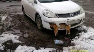 Депутат от  «Единой России»  ездил с трупом собаки в бампере машины | InfoResist
