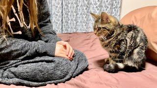 高級ベッドを爪とぎしてしまい飼い主に本気でお説教されてしまった子猫
