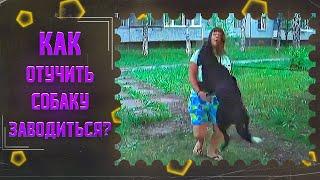 Как отучить собаку прыгать на людей и возбуждаться при виде собак(один из способов)