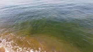Черное море 6.40 утра. - ЖЕСТОКИЕ водоросли :) 14.08.2018