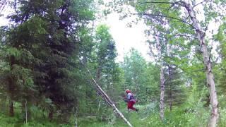 Przecinka młodego lasu