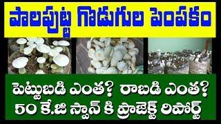 Milky Mushroom Cultivation in telugu   how to cultivate mushrooms in 2019