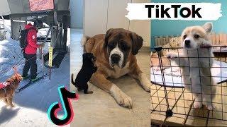 TIK TOKS THAT MAKE YOU GO AAWWW | Adorable Dog TikTok Videos
