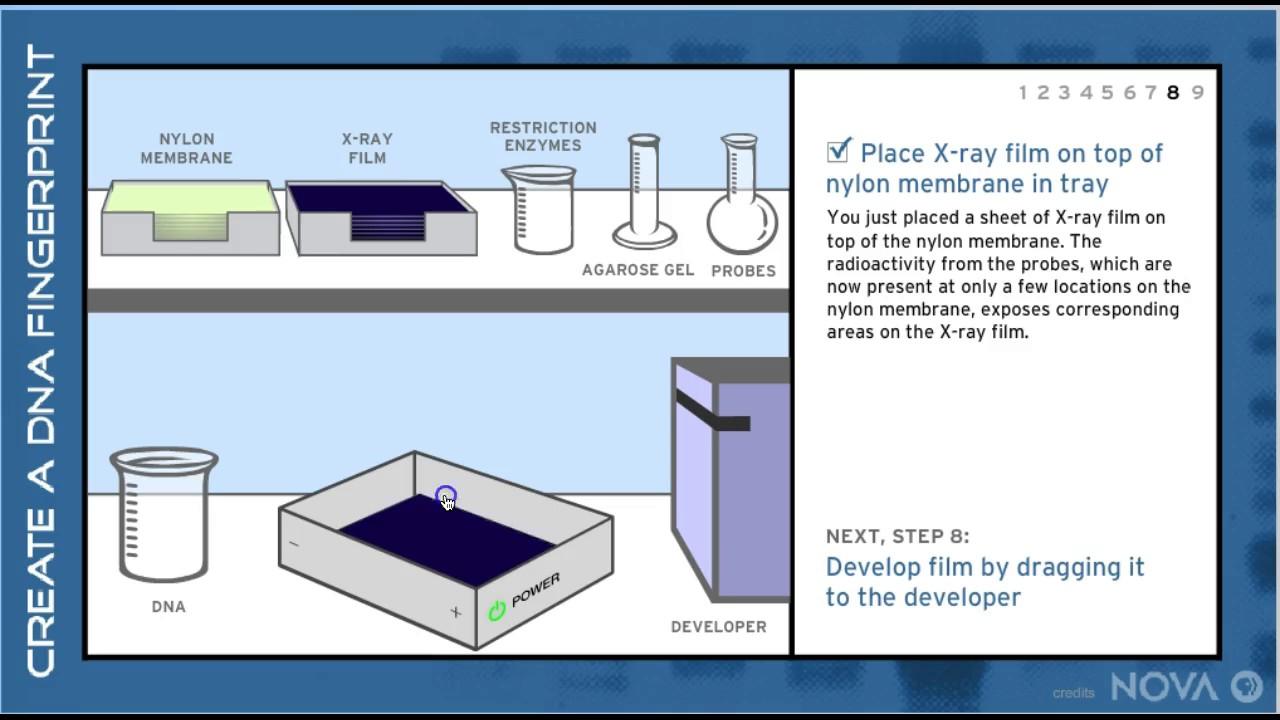 Pbs nova making a dna fingerprint to solve the mystery who youtube pbs nova making a dna fingerprint to solve the mystery who ccuart Gallery