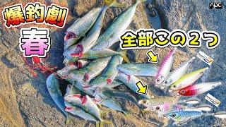 【ショアジギング】春の爆釣劇!!コスパ最強ルアーがヤバイ☆ サニールアーズ メタルジグ