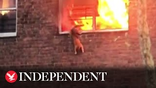 Cat jumps from window of burning building to narrowly escape fire