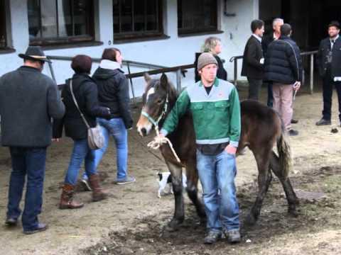 Pferdemarkt Miesbach