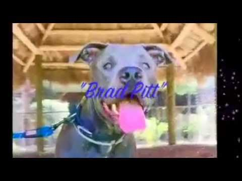 Palm Beach County Animal Control Adoption  video for Brad Pitt A1782362