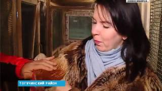 Новосибирцы ринулись покупать живых символов 2017 года
